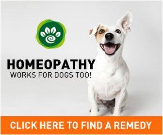 best pet remedies