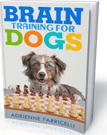 dog intelligence training